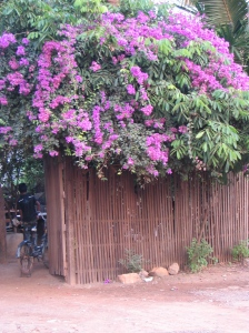 A common sight in Cambodia, these flowers were at a house down the street from the children's home.